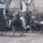 piccioni disinfestazione